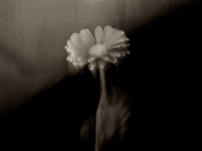 Mathilde Dupont-Nivet :: Effleurement monochrome #1