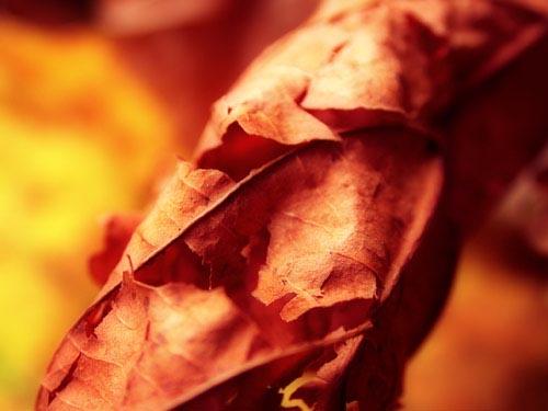 frosk :: Autumn 03 #7