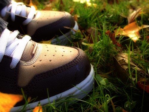 frosk :: Autumn 03 #8