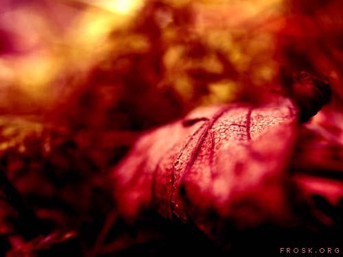 frosk :: Spring03 #1