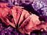 frosk :: Spring03 #5