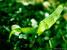frosk :: Spring03 #6
