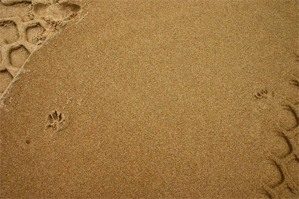 Marise Laget :: à mes pieds sur le sable #4