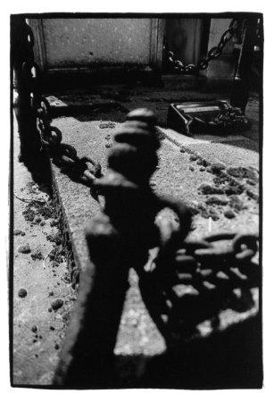 Laurent Orseau :: Cemetery #9