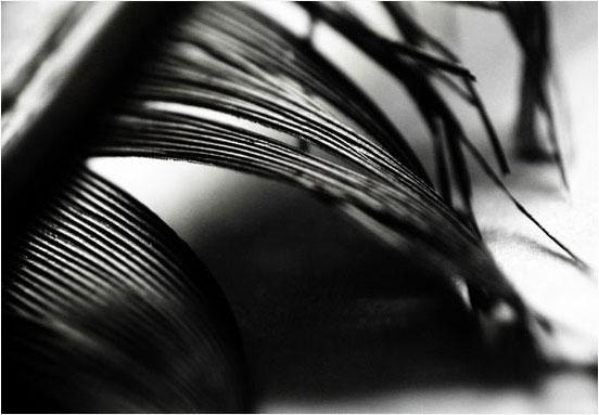 Laurent Orseau :: Raven's feather #11