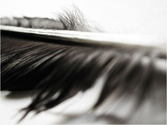 Laurent Orseau :: Raven's feather #2