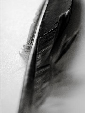 Laurent Orseau :: Raven's feather #6
