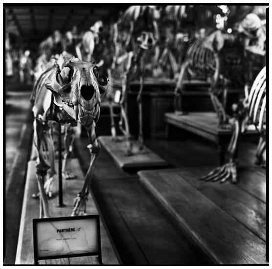 Laurent Orseau :: Skeletons #1
