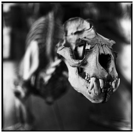 Laurent Orseau :: Skeletons #2
