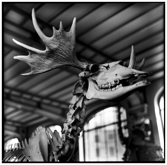 Laurent Orseau :: Skeletons #4