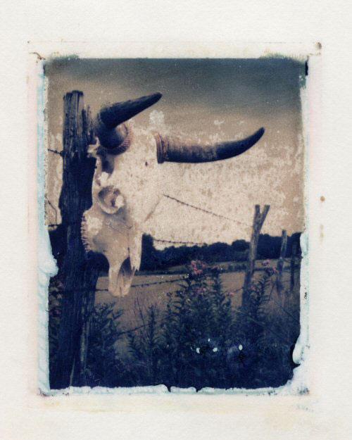 Ann Texter :: Polaroid transfers #10