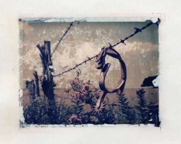 Ann Texter :: Polaroid transfers #11