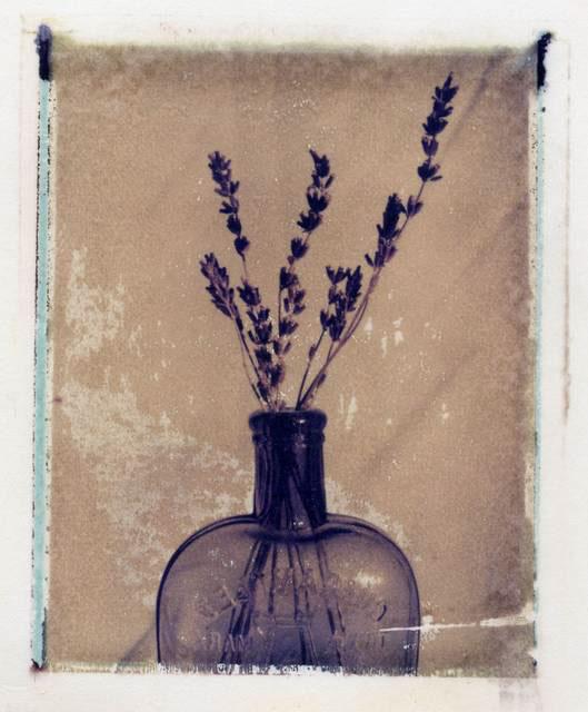 Ann Texter :: Polaroid transfers #14