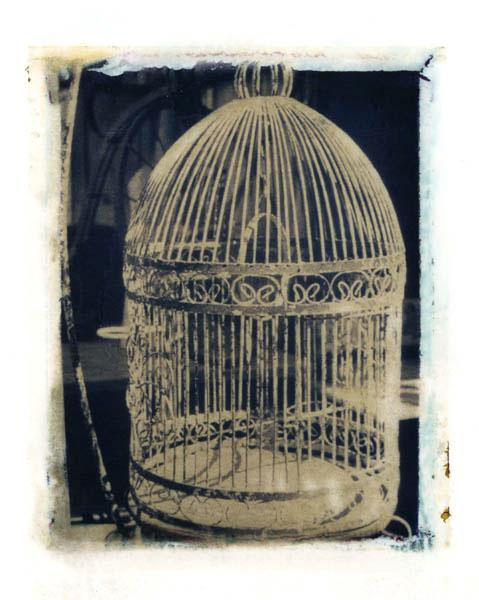 Ann Texter :: Polaroid transfers #15
