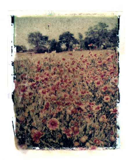 Ann Texter :: Polaroid transfers #6