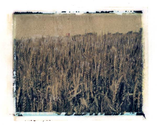 Ann Texter :: Polaroid transfers #8