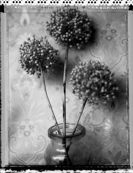 Ann Texter :: Polaroids #1