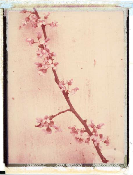 Ann Texter :: Polaroids #3
