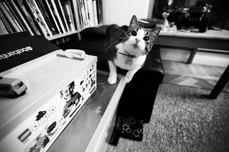 Cats by Laurent Orseau #57