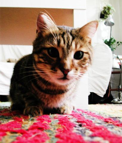 miam the cat #1