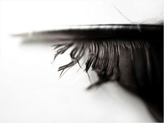 .: Laurent Orseau :: Raven's feather