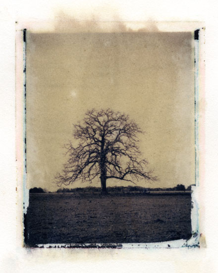 .: Ann Texter :: Polaroid transfers