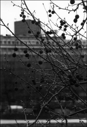 Paris - misc, France by Laurent Orseau #4