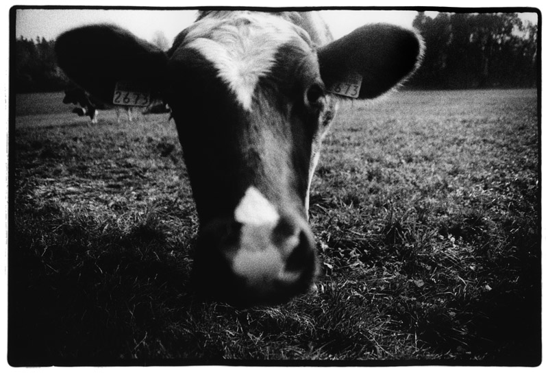 Animals by Laurent Orseau #15