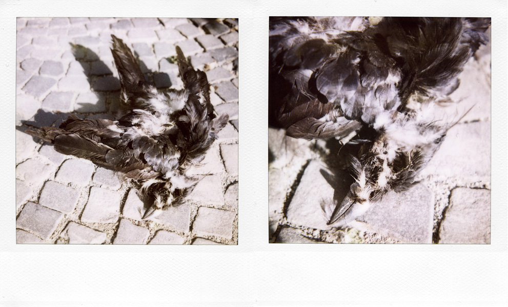 Animals by Laurent Orseau #24