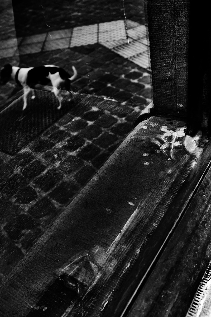 Animals by Laurent Orseau #32
