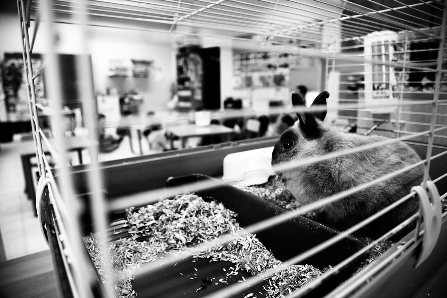 Animals by Laurent Orseau #34