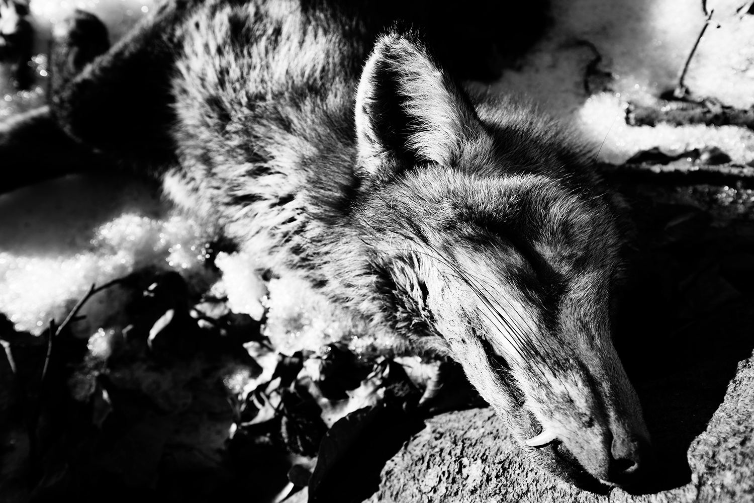 Animals by Laurent Orseau #37