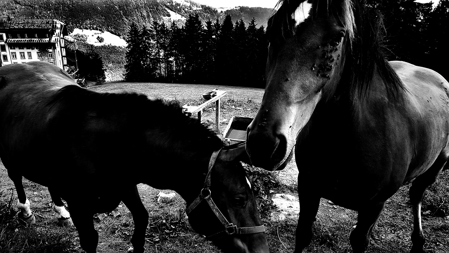 Animals by Laurent Orseau #41