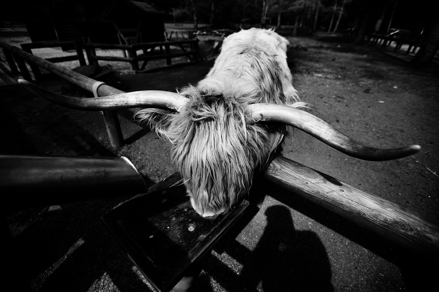 Animals by Laurent Orseau #45