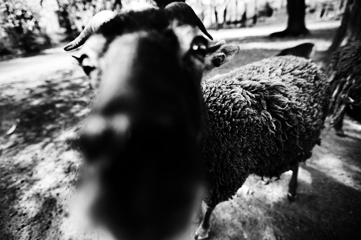 Animals by Laurent Orseau #48