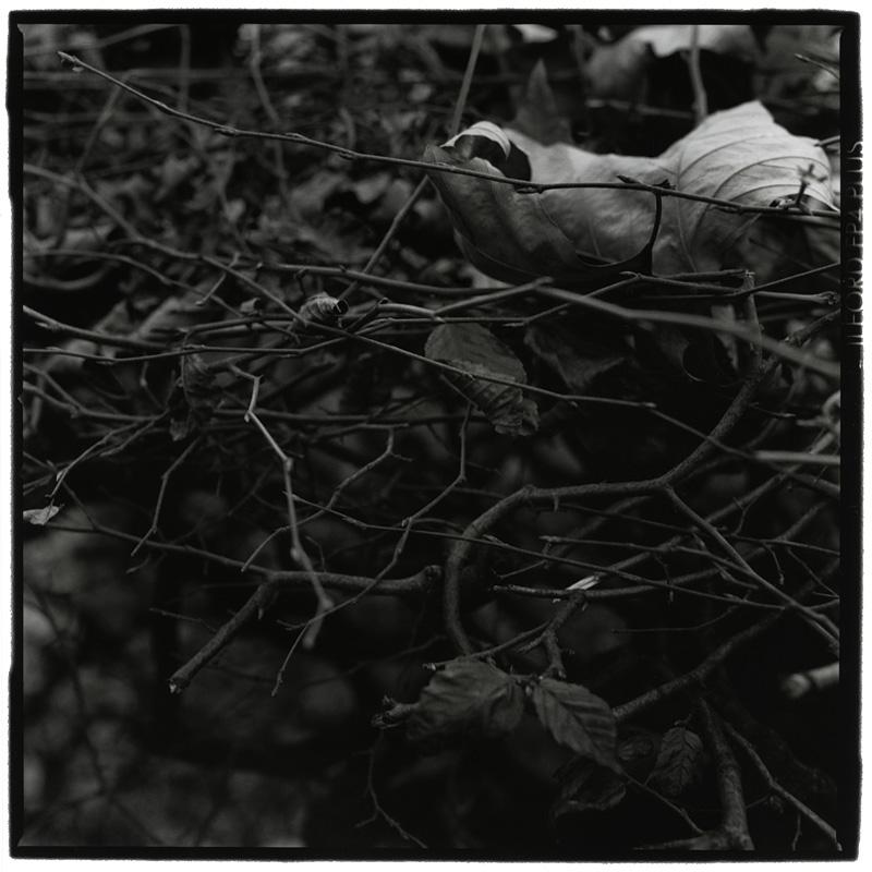 Dark Nature by Laurent Orseau #1