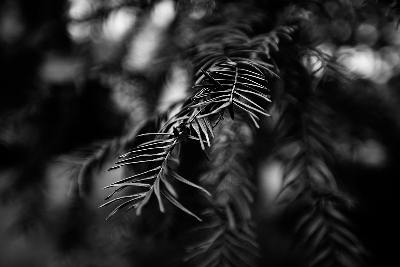 Dark Nature by Laurent Orseau #100