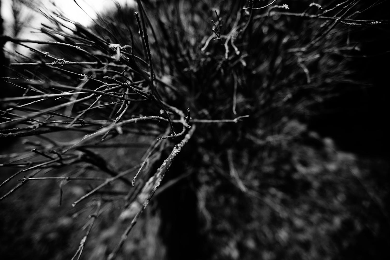 Dark Nature by Laurent Orseau #103