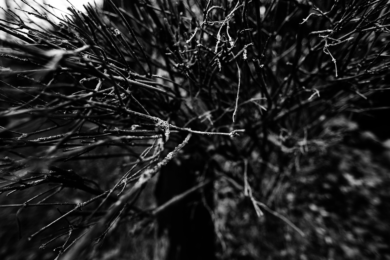 Dark Nature by Laurent Orseau #105