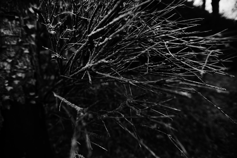 Dark Nature by Laurent Orseau #108