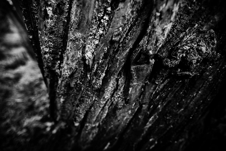 Dark Nature by Laurent Orseau #109
