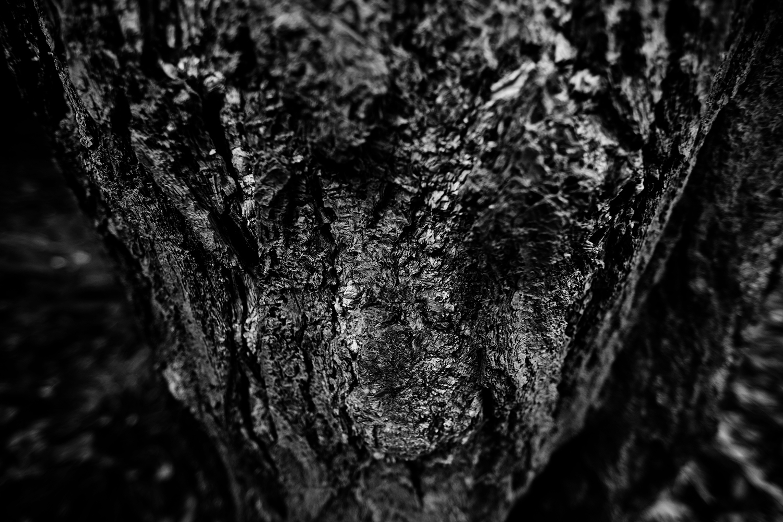 Dark Nature by Laurent Orseau #111