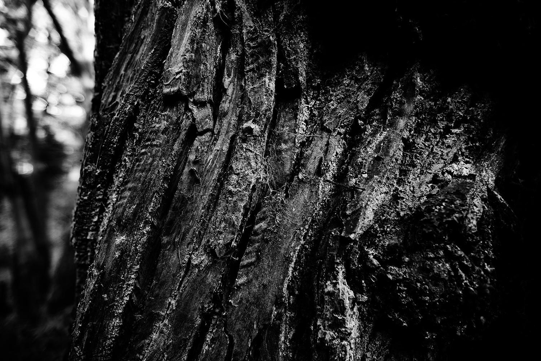 Dark Nature by Laurent Orseau #112