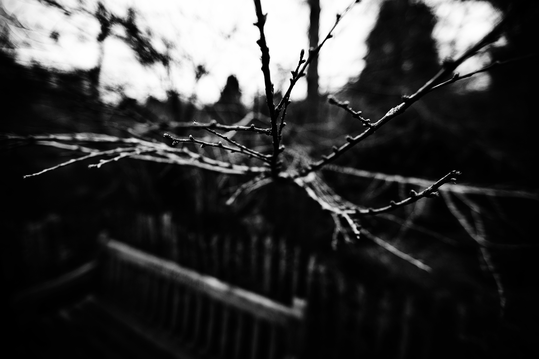Dark Nature by Laurent Orseau #114