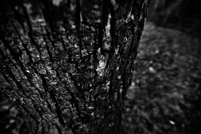 Dark Nature by Laurent Orseau #117