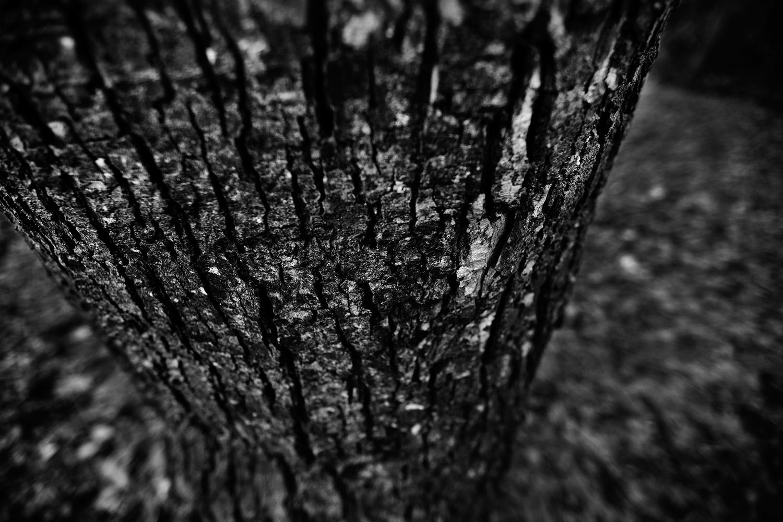 Dark Nature by Laurent Orseau #118