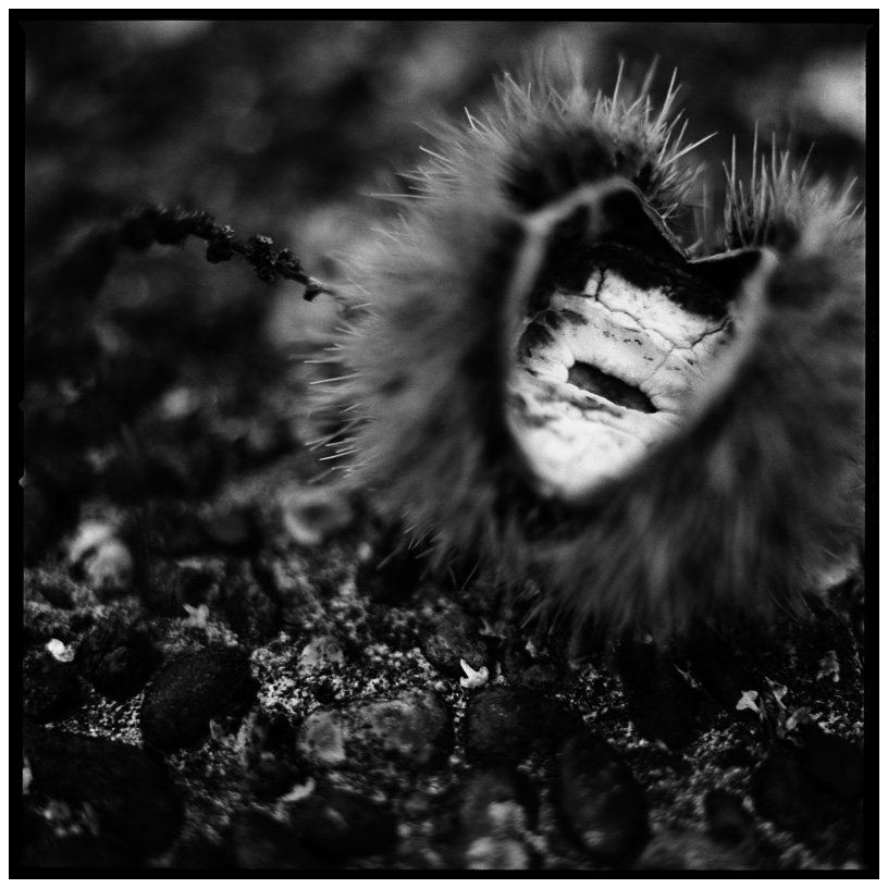 Dark Nature by Laurent Orseau #12