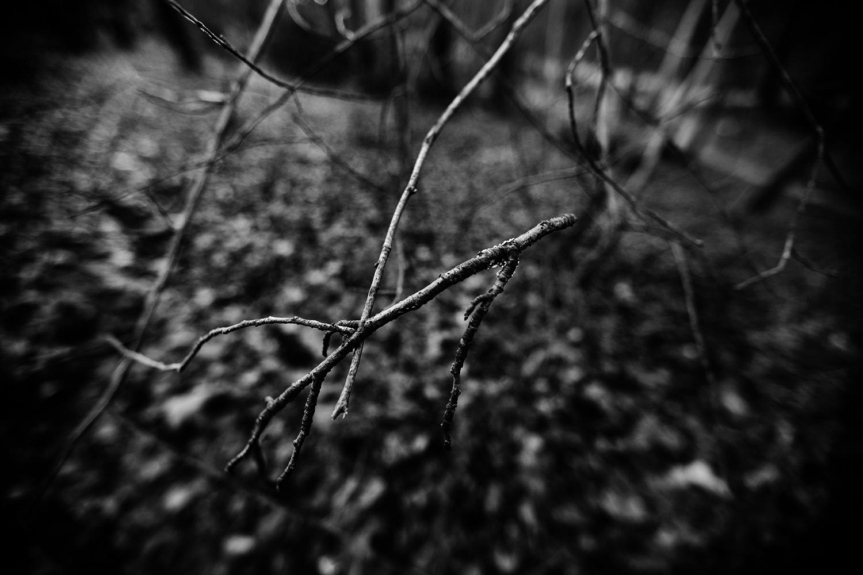 Dark Nature by Laurent Orseau #120