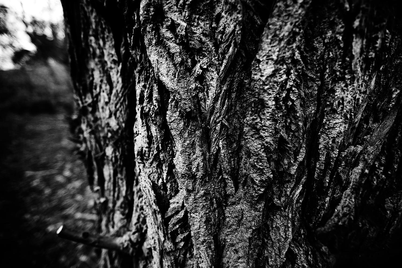Dark Nature by Laurent Orseau #121