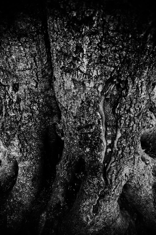 Dark Nature by Laurent Orseau #122